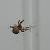 Spider-5