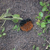 Woolly Bear-1