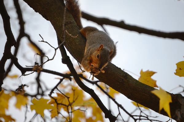 Squirrel-4