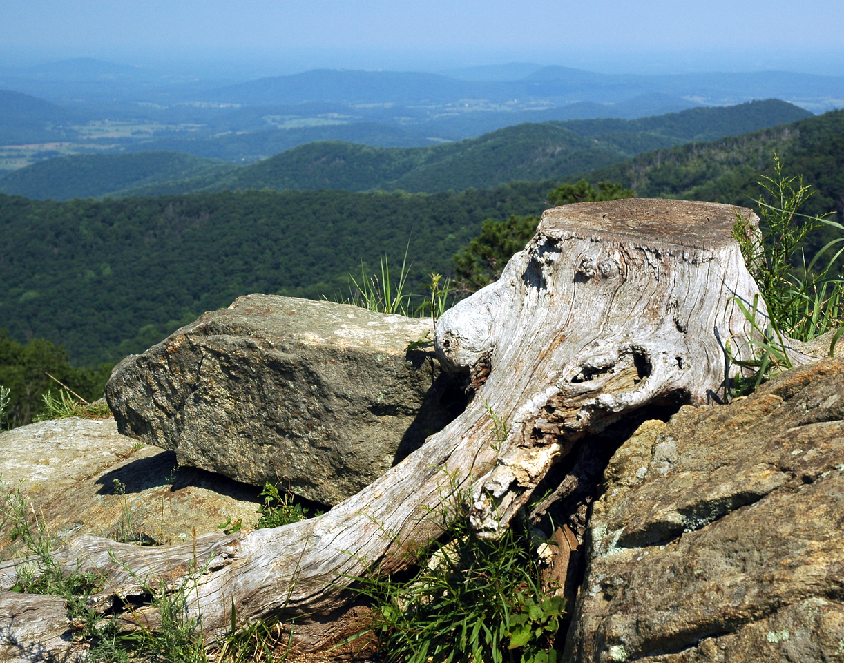 Shenandoah, Skyline Drive overlook where an old stump weathered many seasons of mother natures forces but could not withstand the forces of man