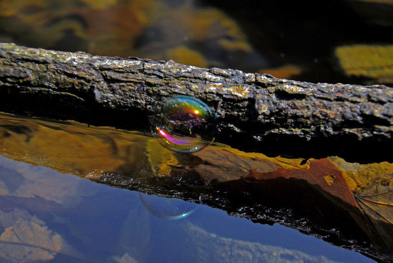 This bubble is holding onto this tree limb to prolong its life as an individual. Its rainbow colors make it stand out from the browns and greens of the pond.
