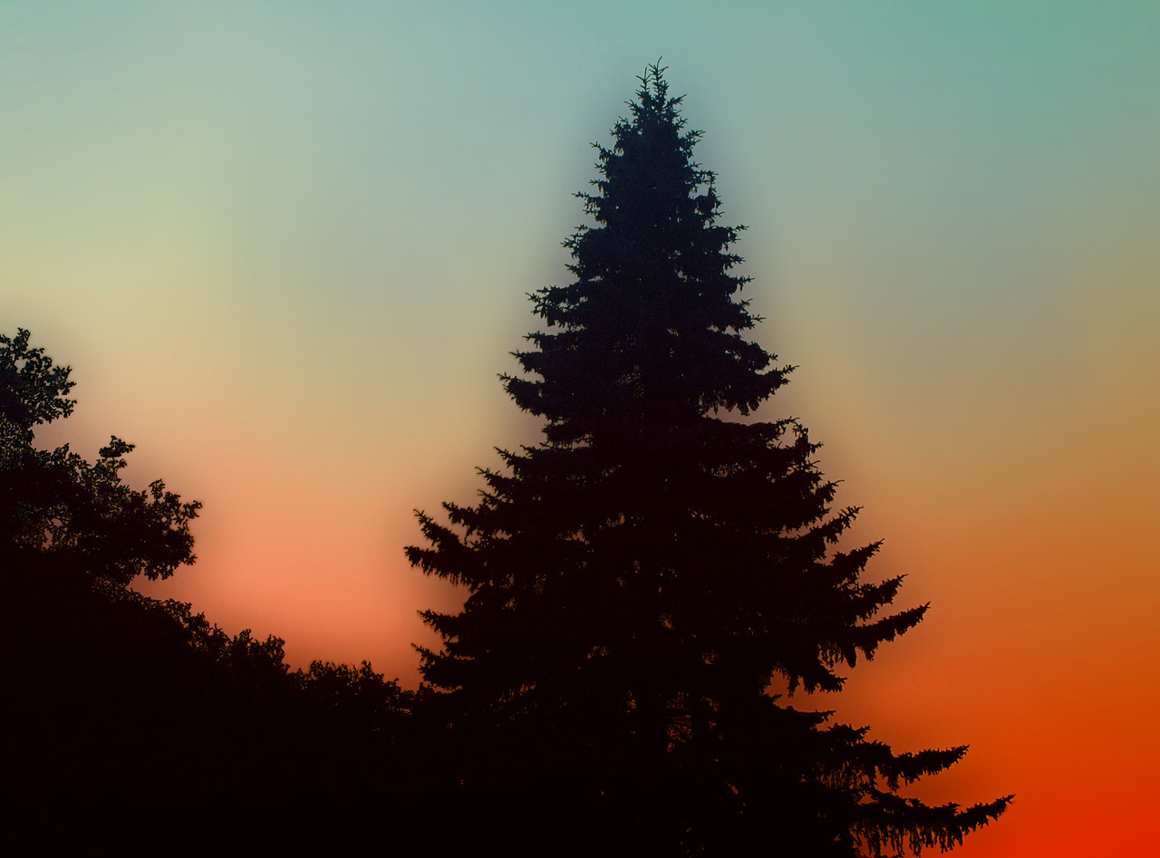 The sunsets behind a great pine in the mountains of Virginia