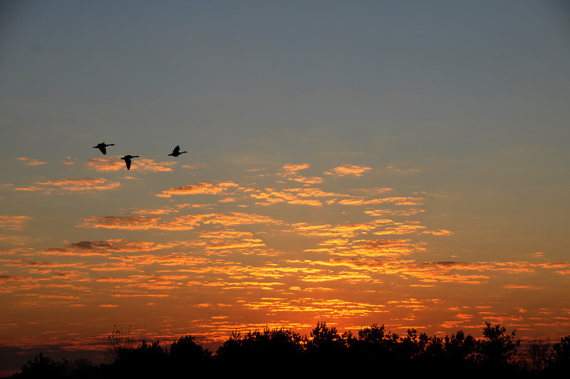 These geese head to the watering hole as the sun rises to greet a new day