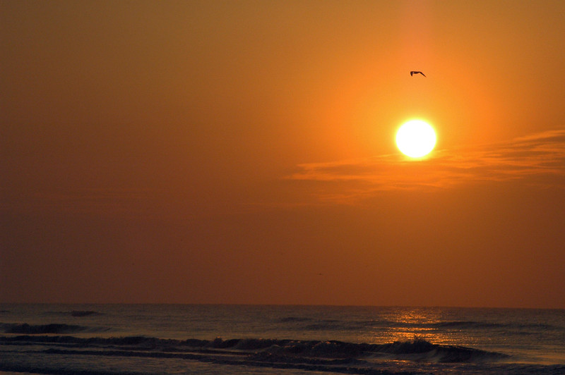 Hilton Head attraction: there is nothing more breathtaking than a sunrise on the beach at Hilton Head in the Spring. Notice the seagull above the sun aligned with the breaking wave below. This amber tinted sunrise photograph is mesmerizing to the senses.