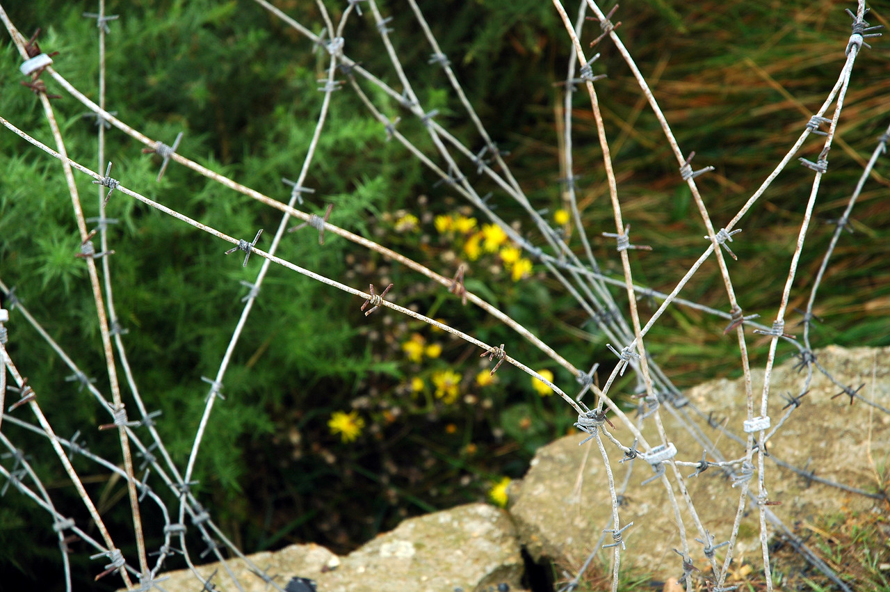 This barbed wire barrier was near a bunker at one of the beaches, Normandy, France. In 1944 the land was barren of beautiful flowers (as seen in the background) because the massive shelling to destroy the bunkers before the Americans landed on Omaha Beach.