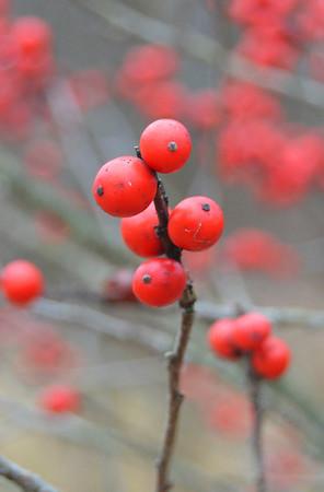 Berry-2