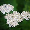 Flowers-17