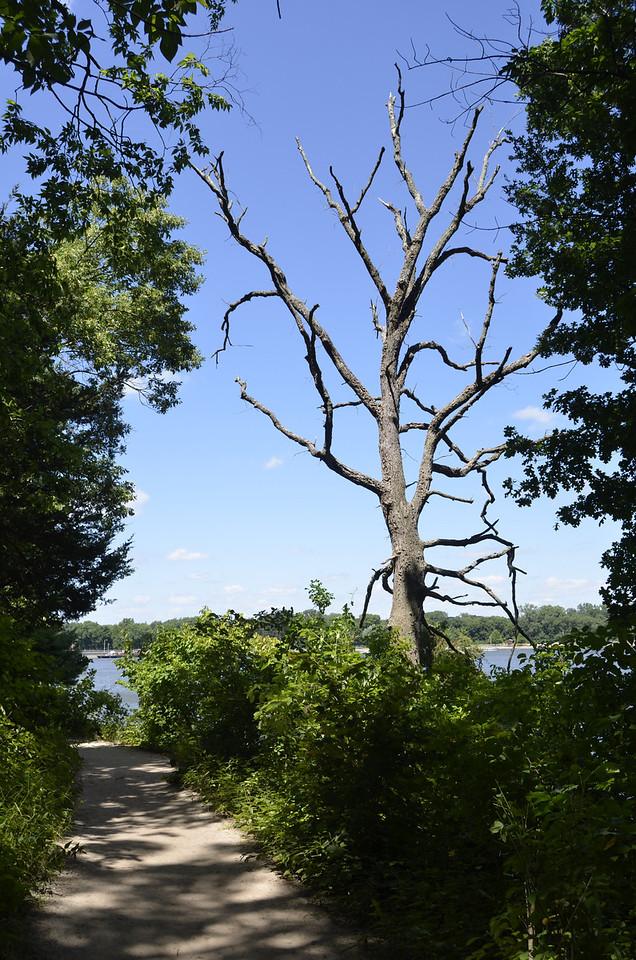 Trees-4