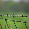 Fences - 7