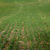 Fields-1