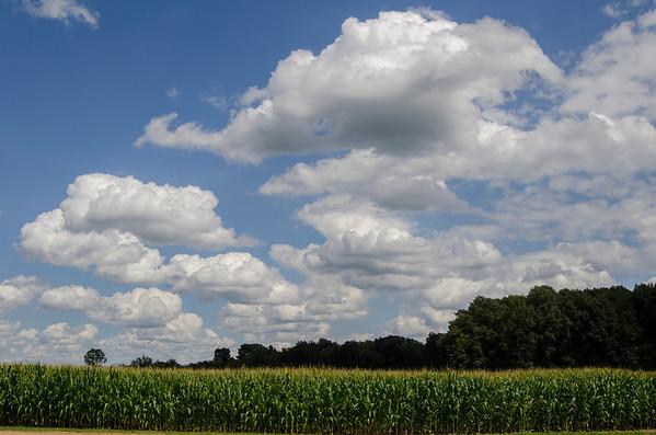 Fields-4