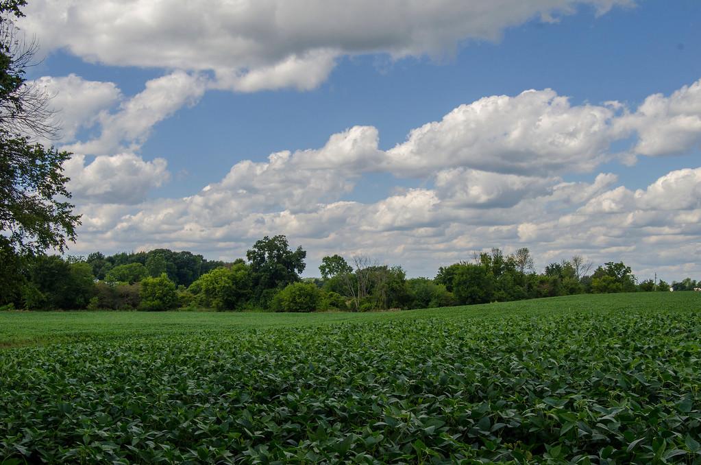 Fields-5