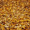 Leaves-5