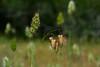 grass seed (Santa Rosa, CA).
