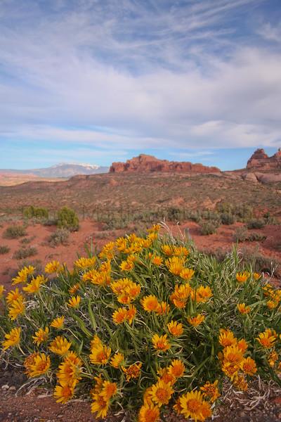 Desert (or Rough) Mule's Ears<br /> Utah