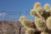 Cholla<br /> Anza Borrego Desert State Park, California.