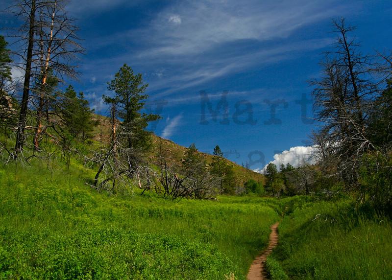 Hewlett Gulch Trail near the Poudre River, CO.