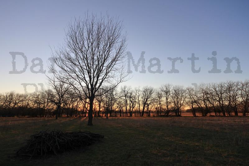 Kansas shelter belt at sunset.  Near Newton, KS.