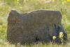 Oregon rock!<br /> Rocky Mountain National Park, Colorado