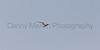 Least Tern<br /> Cheyenne Bottoms, Barton County, Kansas.
