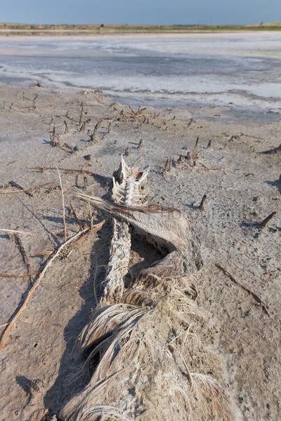 Sandhill Crane<br /> Muleshoe National Wildlife Refuge, Texas.