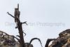 Great Horned Owl<br /> Las Animas County, Colorado