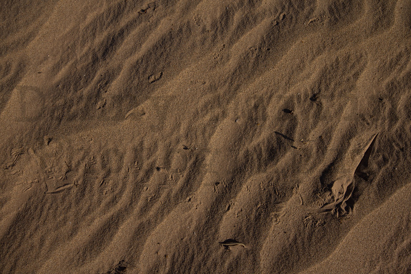 Colorado Desert Fringe-toed Lizard tracks in sand<br /> Imperial County, California