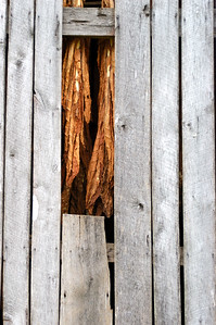 Tobacco Barn
