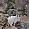 Cat exploring the Roman ruins at Ephesus, Turkey.