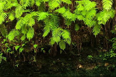 Econfina Creek
