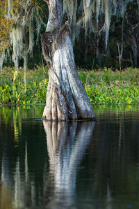 Edward Ball Wakulla Springs State Park