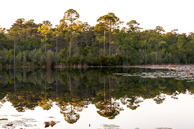 Alligator Lake