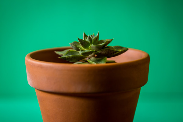 Green Succulent Plant on a Green Background