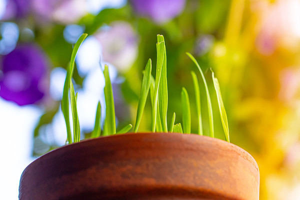 Cat Grass on a Colorful Background