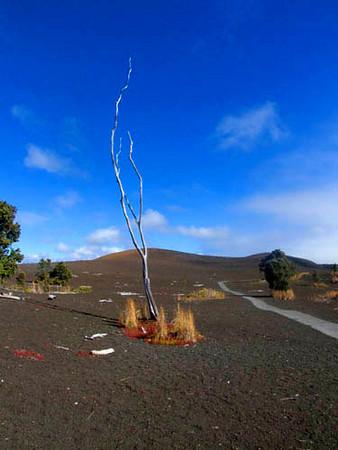 Devastation Trail, Hawaii Volcanoes National Park, Big Island of Hawaii