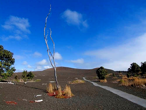 Devastation Trail, Hawaii Volcanoes National Park, Big Island of Hawaii