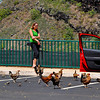moa (wild chickens) at the parking lot of Opaeka'a Falls, Kauai