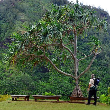 Limahuli Garden, National Tropical Botanical Garden (NTBG) Kauai