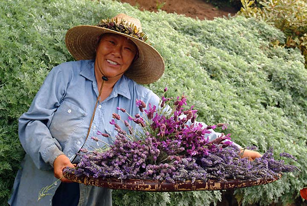 Ali'i Kula Lavender Farm, Upcountry Maui