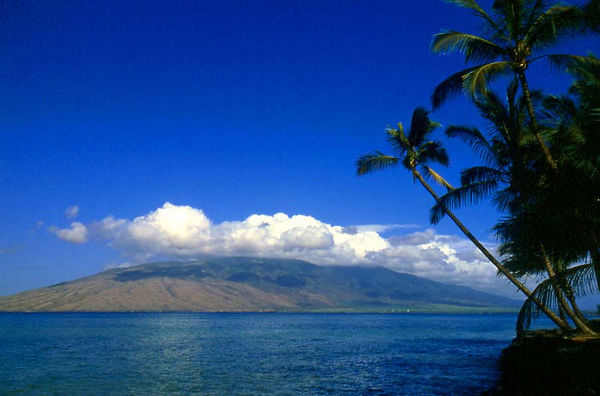Palm trees in Kihei, Maui, frame the West Maui Mountains.