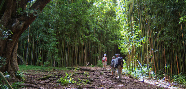 Hiking through a bamboo forest, Hana, Maui.