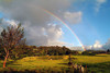 Rainbow arcs over a pasture on the slopes of Haleakala, Maui.