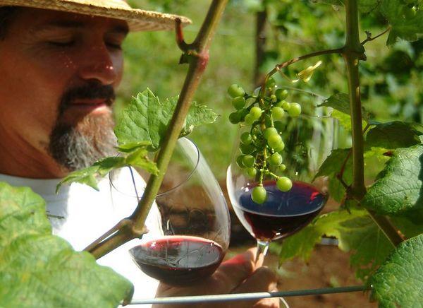 Fledgling winery at O'o Farms, Upcountry Maui.