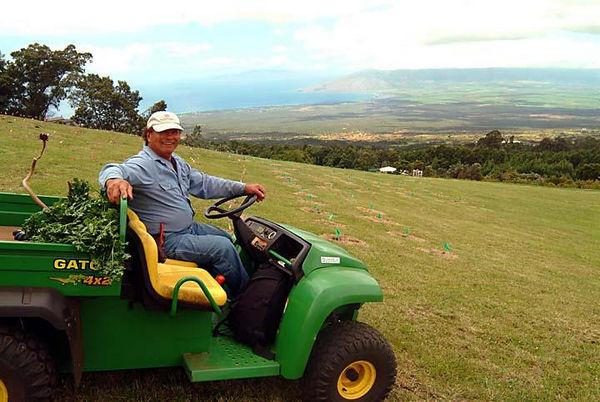 Owner Ali'i at Ali'i Kula Lavender Farm, Upcountry Maui