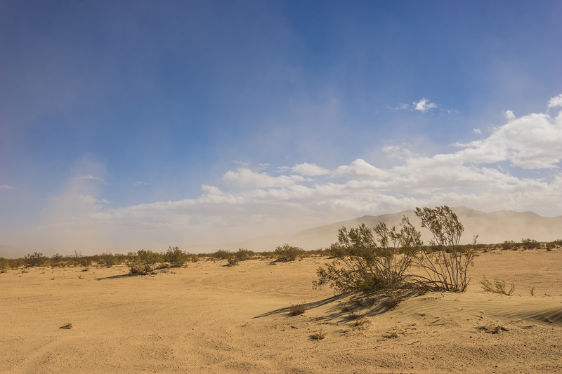 Thin Brush in Desert Climate