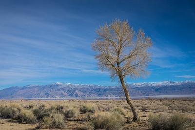 Desert Tree in California Wilderness