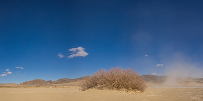 Panorama of Desert Single Brush
