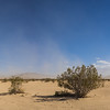 Panorama of Desert Brush in Wilderness