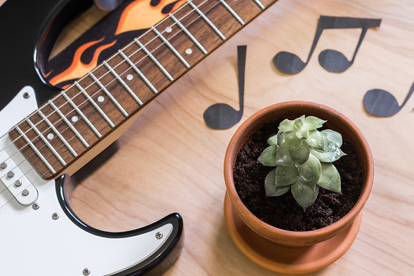 Succulent with a Guitar and Music Notes