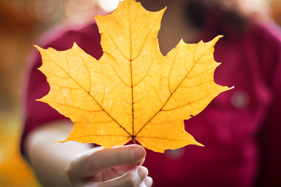 Holding a Maple Leaf